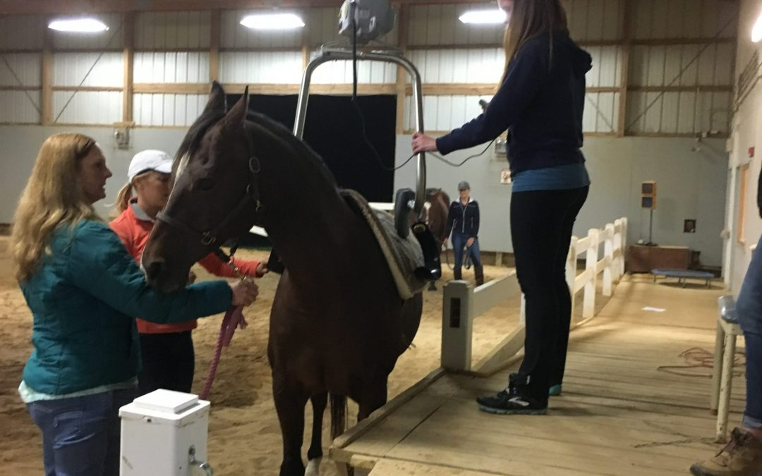Shining Hope Farms Receives $7,500 Quality of Life Grant from Christopher & Dana Reeve Foundation for Lift System